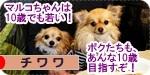 wakai banner.JPG