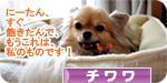 watashinomono banner.JPG