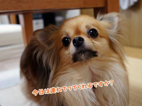 yomotsuku110903-1.JPG