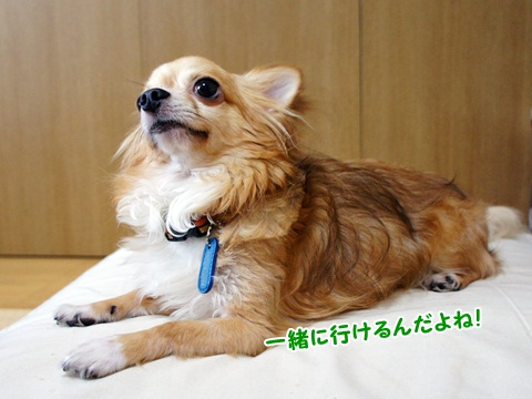 yomotsuku110903-2.JPG