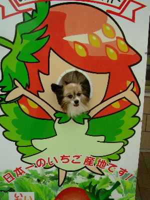 2011益子11.JPG