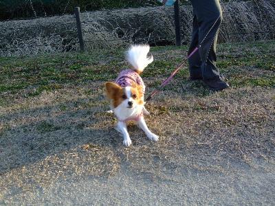 2012初散歩6.JPG