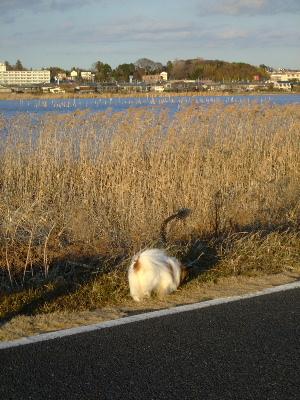 2012初散歩9.JPG