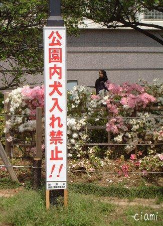 つつじ公園27