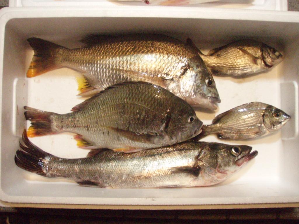 20090709奥浜名湖35cm.JPG