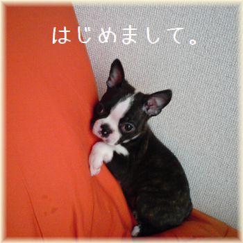 2009102013535.jpg