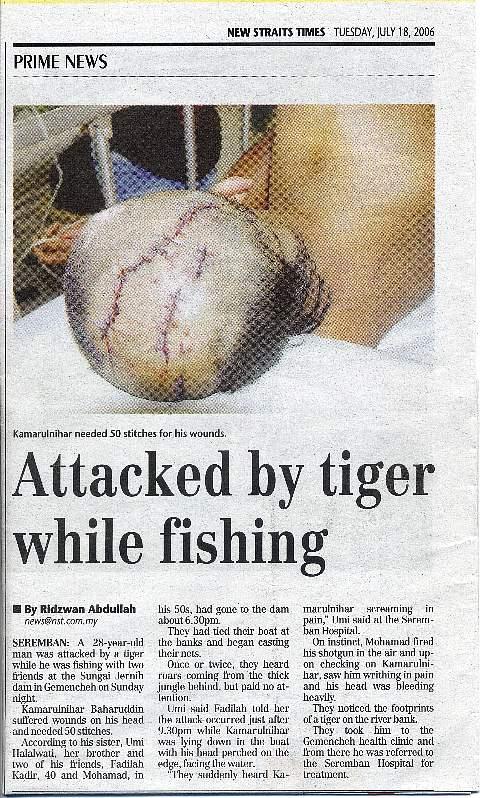 capt000-tiger.jpg