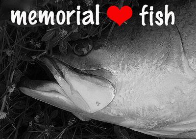 memorialfish.jpg