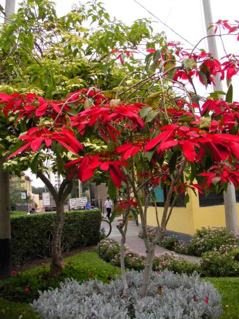 クリスマスの木 (2).JPG
