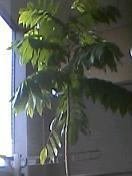 豆の木20081017