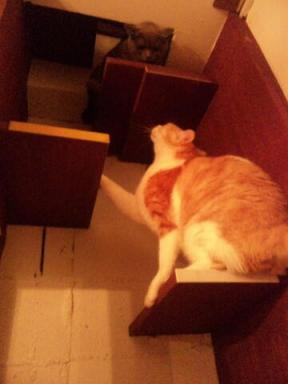 1212猫階段