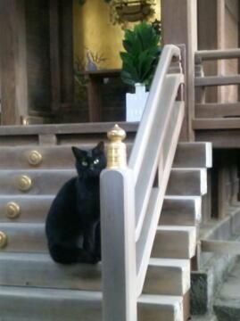 1228黒猫