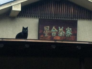 1228茶屋の黒猫