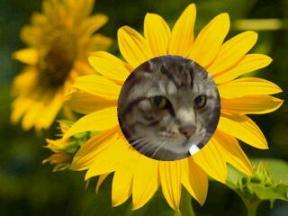 0115ひまわり猫