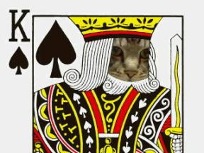 0115トランプ猫