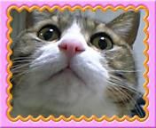 アメブロ「猫に吹く風」