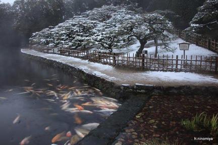 2-11栗林公園 雪 - ninomiya.hiroyuki - Picasa ウェブ アルバム.jpg