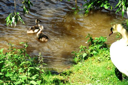 swan river.jpg