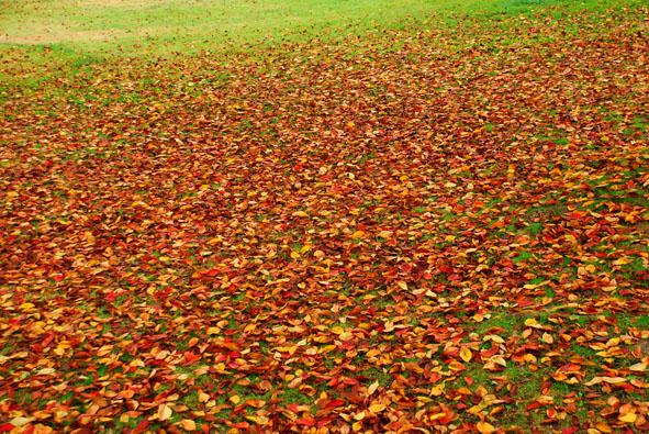 colored leaves.jpg