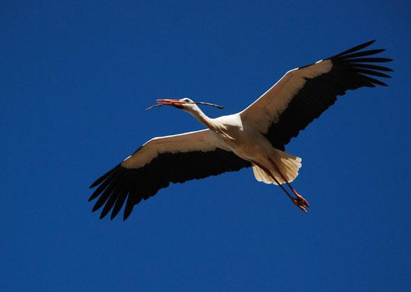 stork_b.jpg