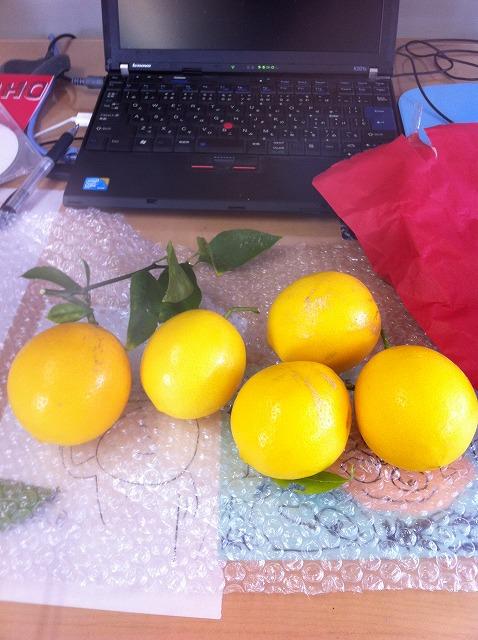 レモンの果実です!