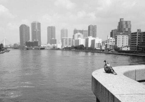 20080527勝鬨橋.JPG