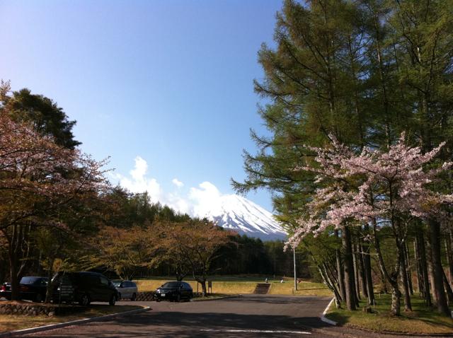 富士桜201105_1