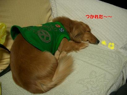 ルー1(疲れた~)