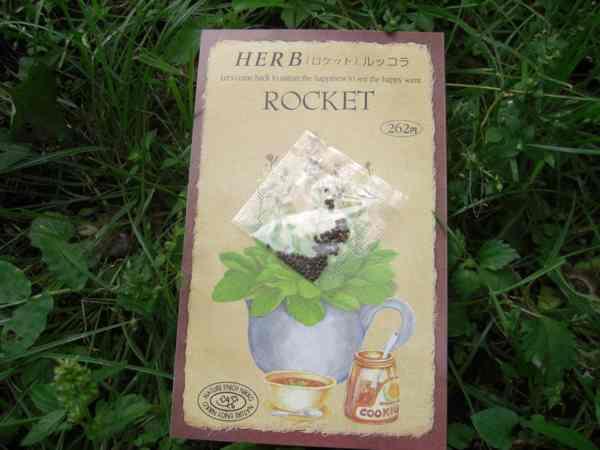 ロケット(ルッコラ)01