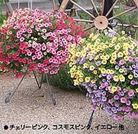 ハンギングに向く花「ミリオンベル」 | 遥かな世界 - 楽天ブログ