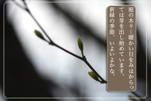 木々の芽.jpg