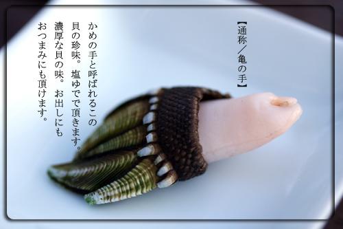 亀の手表紙.jpg
