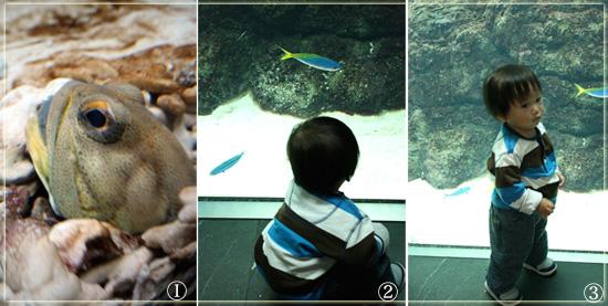 三男と魚.jpg