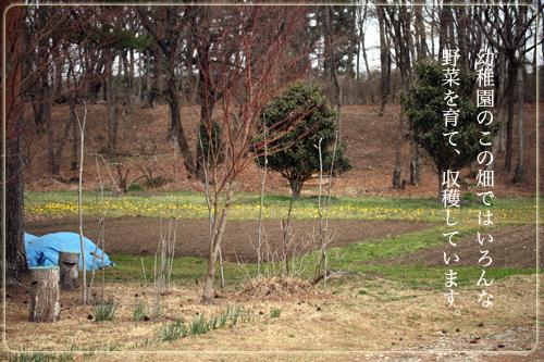 幼稚園畑.jpg