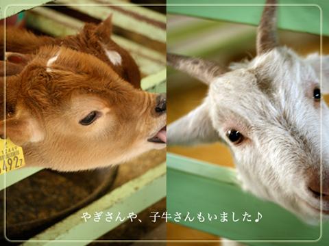牛とやぎ.jpg