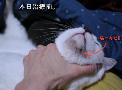 チコリの猫ニキビに悩む日々。 | PINO日記in西小山 - 楽天ブログ