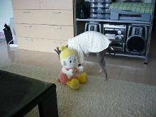 2006_0623画像0006.JPG