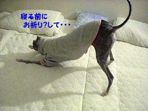 寝る前に・・・1