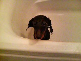 風呂こた2