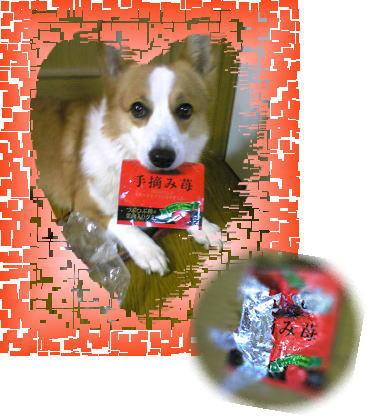 CM犬.jpg