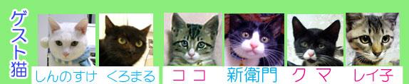 ゲスト猫-07.jpg