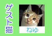 登場猫物 ねゆ.jpg