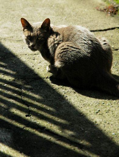信心深い猫