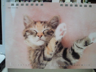 カレンダー猫.jpg