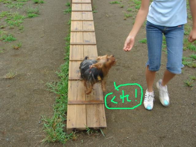 ポロ&綾 森林公園 008.jpg