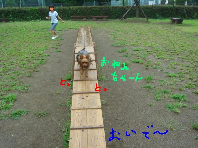 ポロ&綾 森林公園 011.jpg