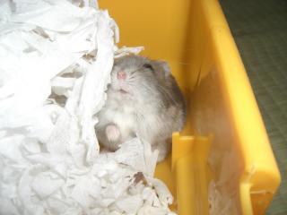 寝起きのトチロー
