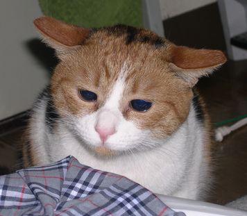 あの目…、あの耳…