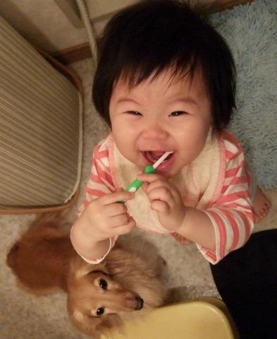歯磨きタイム