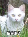 猫目雅子!